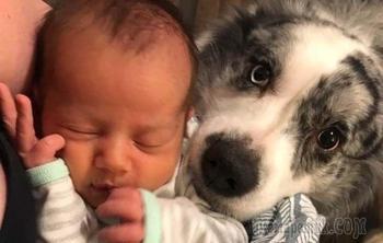 Доказательства, что животные готовы на все ради заботы о хозяйском детеныше