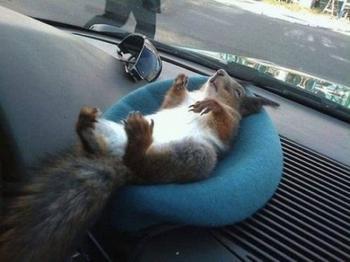 Сплошной отдых и комфорт