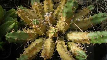 Какие 8 болезней и 2 вредителя уничтожат ваш кактус