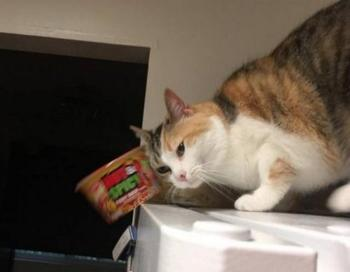 Забавные стоп-кадры с кошками