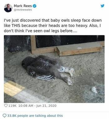 Как спят совы?