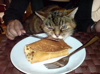 26 фотографий, доказывающих что не кошки и собаки наши домашние животные, а мы их