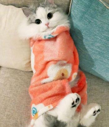 26 завёрнутых в одеялко котиков, которые выглядят как пушистые кошачьи буррито