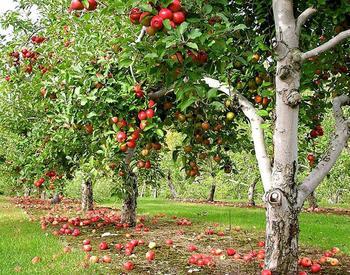 Пора забот о будущем урожае — август в саду