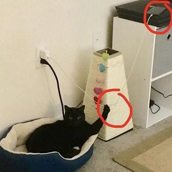 Фото о том, что наглости котов нет предела