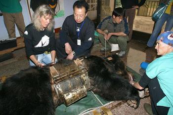 Made in China: история медведицы, которую спасли из ужасных условий желчной фермы