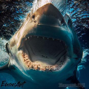 Потрясающие фотографии акул