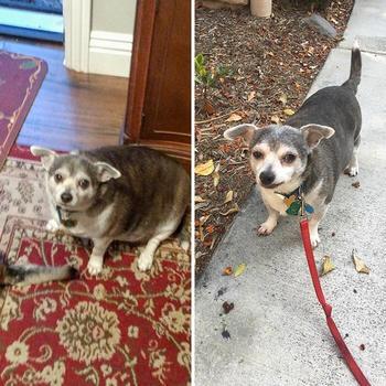 20 собак до и после похудения, которых больше нельзя назвать мохнатыми буханками