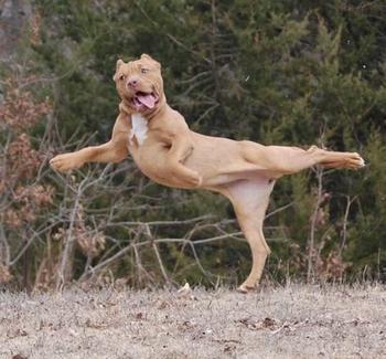 У животных тоже бывают фотографии, которые они захотели бы срочно удалить