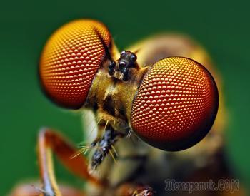 Почему мы должны научиться прислушиваться к насекомым?