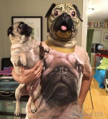 Смешные собаки, которые боятся самых нелепых вещей