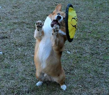 Нелепые фото из жизни собак. Часть 2