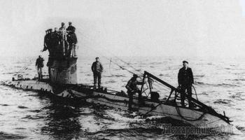 Тайное оружие англичан: зачем британские военные учили чаек гадить на подводные лодки