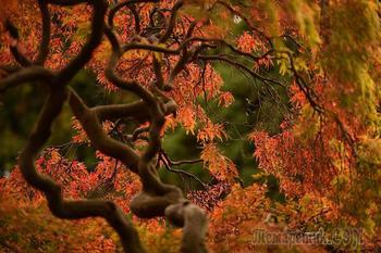 Картинки леса в фотографиях