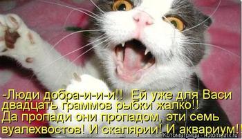 Кошачьи мысли вслух