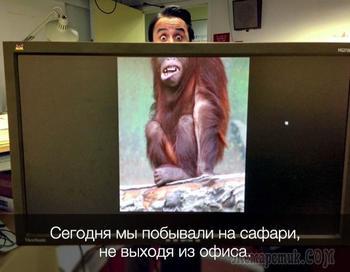 20 доказательств, что работа не волк, в лес не убежит