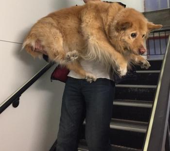 17 фото о том, что собаки на самом деле остаются щенками на всю жизнь