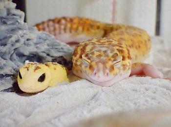 Самый улыбчивый геккон, который поднимет вам настроение