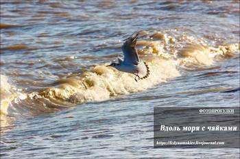 Фотопрогулки.  Вдоль моря с чайками