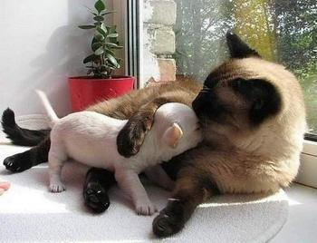 Кошка с собакой вполне могут жить в любви и гармонии