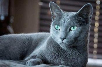 Самые дорогие и редкие породы кошек