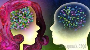 Чем отличается мозг мужчин и женщин: последние исследования
