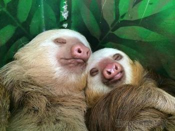 Эти смешные и забавные животные