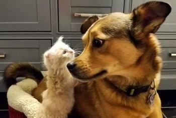 Пес нашел котят на улице и стал им приемным папой