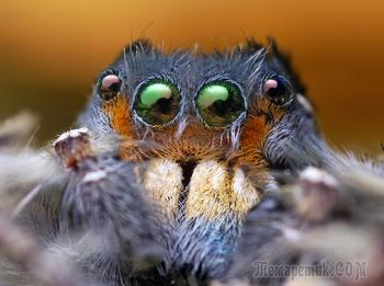 Девять самых ядовитых пауков в мире