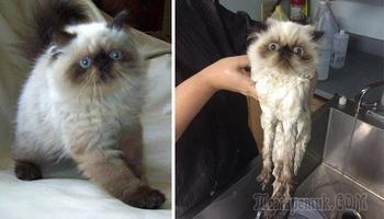 15 смешных животных до и после принятия ванной, которые ненавидят это дело всей душой