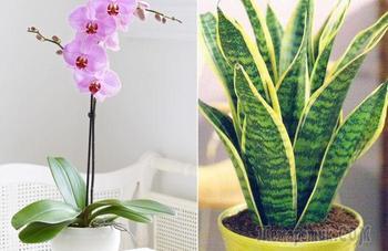 12 стойких комнатных растений для тех, кто часто ездит в командировки или просто забывает поливать цветы