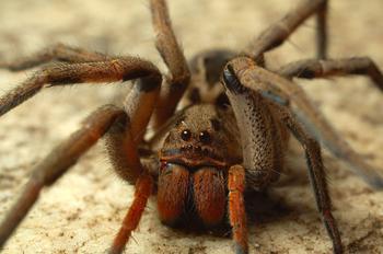 Как избавиться от пауков в квартире, частном доме, во дворе, на улице в теплице
