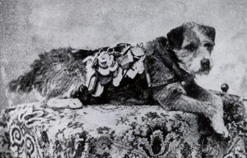 Почтовый пёс Оуни, который преодолел более 200 000 км