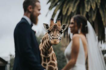 20 забавных свадебных фотографий, на которых запечатлены радостные и неожиданные моменты