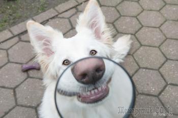 «Улыбайки» от собак