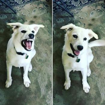 Смешные домашние питомцы до и после того, как их назвали хорошими мальчиками