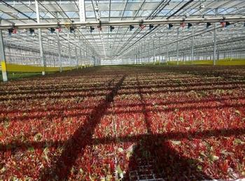Агропромышленный комплекс в 4 квартале 2017 года
