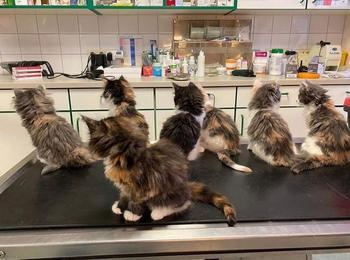 Походы к ветеринару, которые запомнятся людям на всю жизнь