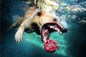 Удивительные подводные собаки