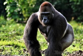 7 животных, которые могут захватить мир