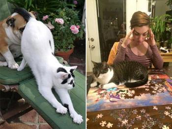 Кошки-проказницы