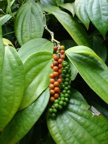 Растения, на которых растут известные продукты
