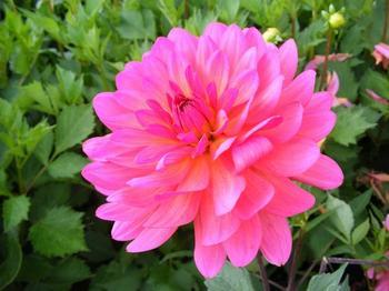 Три оттенка осени – розовый, желтый и фиолетовый