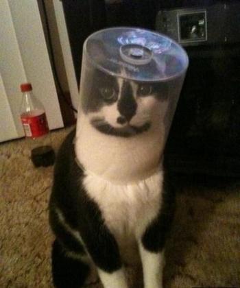 23 кота, которые были наказаны за свое любопытство