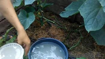 Как подкормить огурцы дрожжами: рецепты и когда нужно вносить удобрение