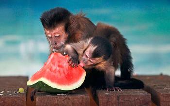 Забавные, необычные фотографии животных