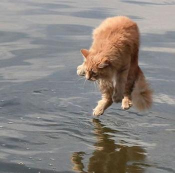 Фотографии котов, сделанные в нужный момент