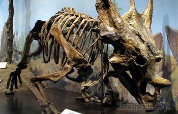 Прекрасно сохранившиеся останки вымерших животных, которые удивили учёных