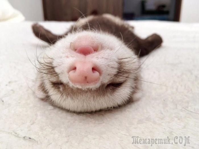 Они заснули, чтобы вы улыбнулись! 25 смешных фото