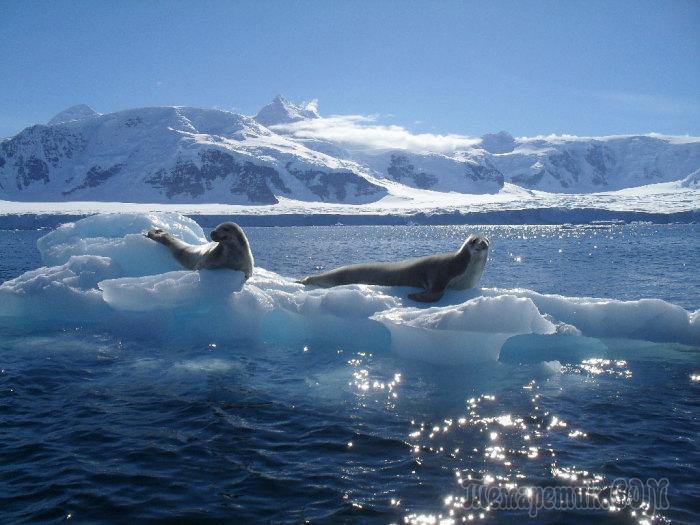 Потрясающие чудеса Антарктиды, которыми нельзя не восхищаться